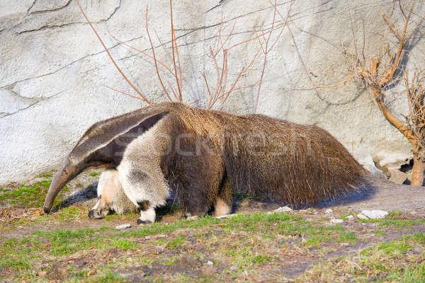 Reus milieu Detroit dierentuin natuur lopen Stockfoto © alexeys