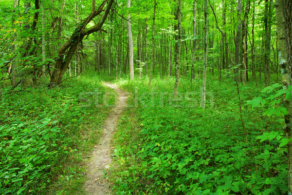 Footpath in the woods Stock photo © alexeys