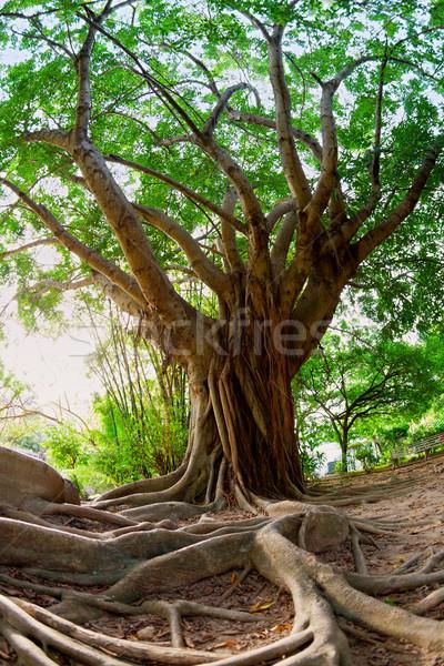 Trópusi fa halszem kép természet park Stock fotó © alexeys