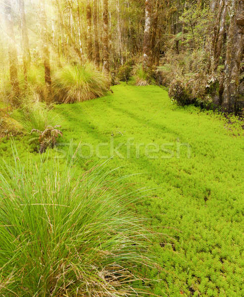Forest Clearing Stock photo © alexeys