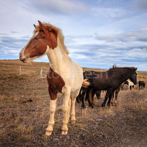 リモート 砂利道 アイスランド 雲 道路 馬 ストックフォト © alexeys