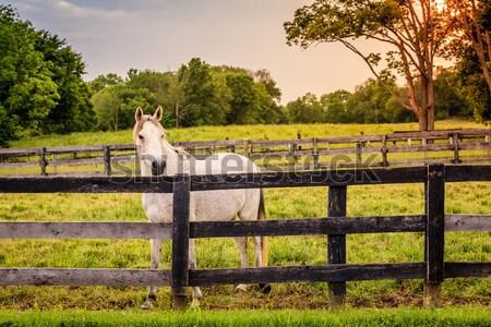 Stock photo: Horse of a farm