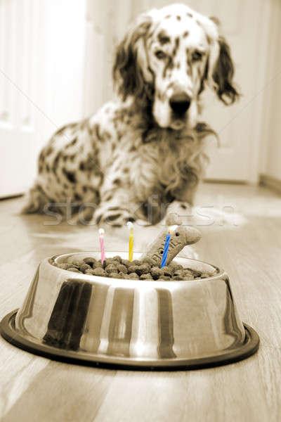 Mi mejores amigos cumpleanos perro pastel de cumpleanos velas Foto stock © alexeys