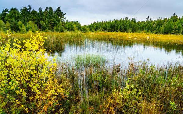 Kuzey manzaralı görmek gökyüzü su orman Stok fotoğraf © alexeys