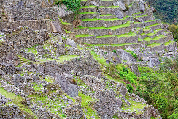 Terraces of Machu Picchu Stock photo © alexeys
