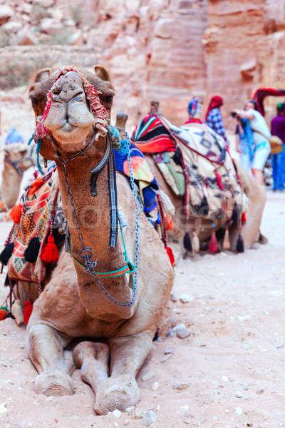 Camel of Petra Stock photo © alexeys