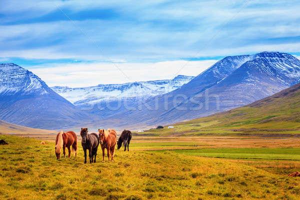 グループ 山 雲 馬 風景 ストックフォト © alexeys