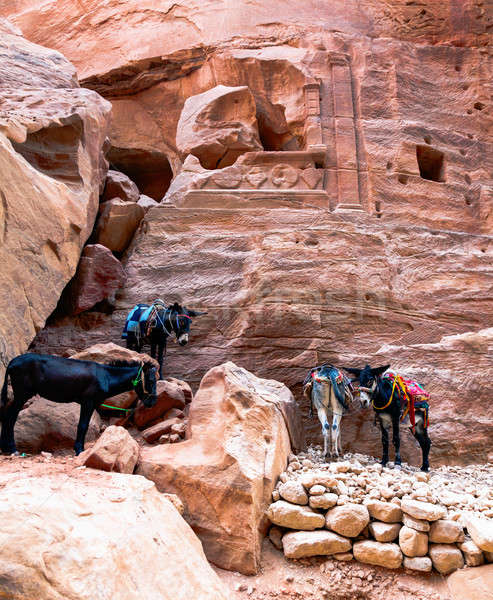 Donkeys at Petra Stock photo © alexeys