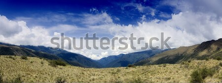 Manu National Park Stock photo © alexeys