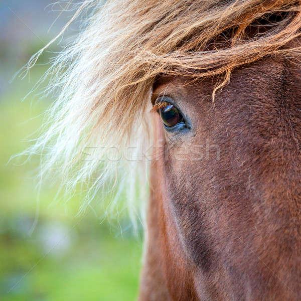眼 ポニー クローズアップ 肖像 ファーム アイスランド ストックフォト © alexeys