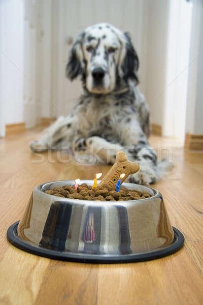 Quick! Make a wish! Stock photo © alexeys
