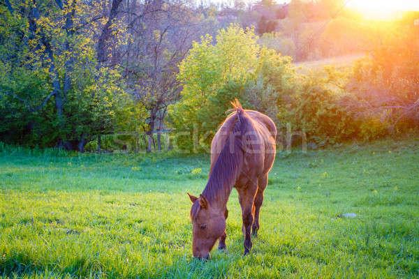 At güzel kestane kısrak çiftlik merkezi Stok fotoğraf © alexeys
