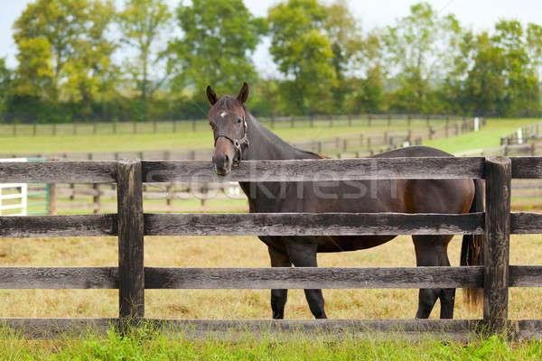 Horse on a farm  Stock photo © alexeys