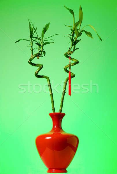 Lucky bamboo Stock photo © alexeys