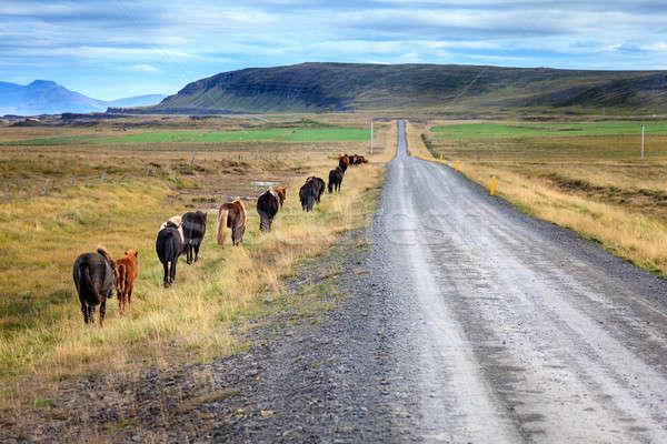 群れ 移動 砂利道 アイスランド 空 ストックフォト © alexeys