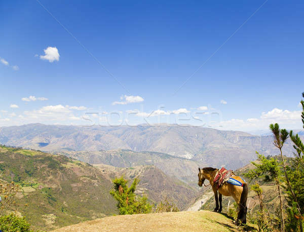 Mule and Andes Stock photo © alexeys