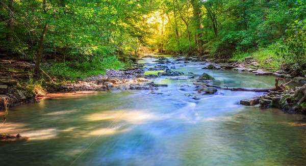 Forest creek Stock photo © alexeys
