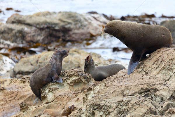 Sea Lion's life Stock photo © alexeys