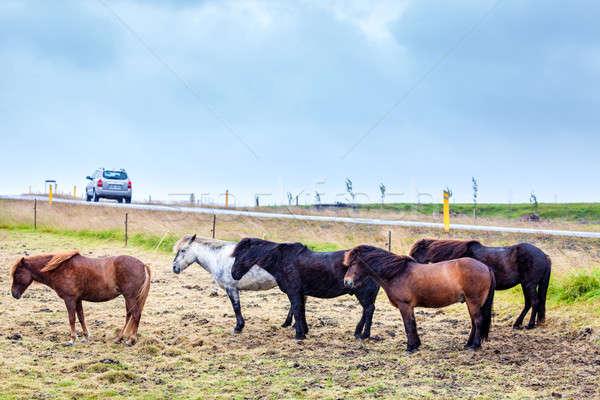 グループ 風 雨 空 道路 馬 ストックフォト © alexeys