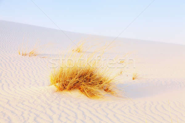 White Sands Stock photo © alexeys