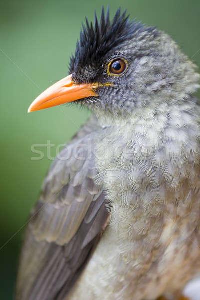 Seychelle-szigetek egy madár fajok szigetek szem Stock fotó © alexeys