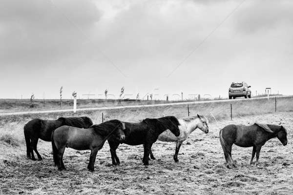 グループ 風 雨 車 道路 馬 ストックフォト © alexeys