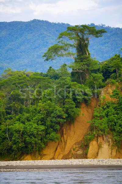 Tree on a cliff Stock photo © alexeys