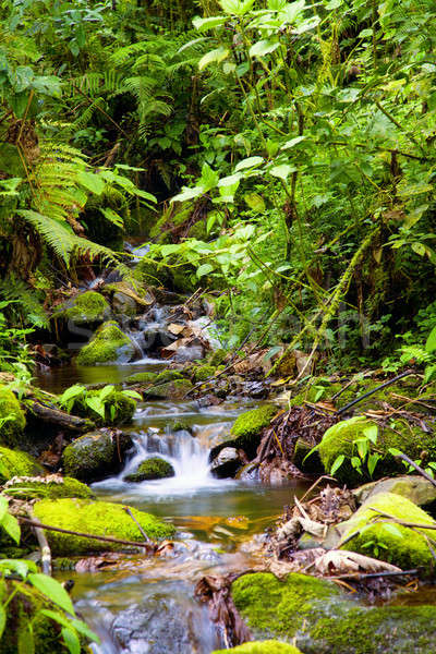 Creek in rainforest Stock photo © alexeys