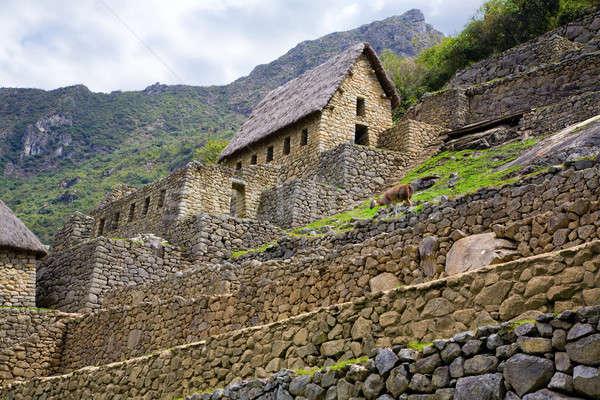 Machu Picchu poort huis lama lopen oude Stockfoto © alexeys
