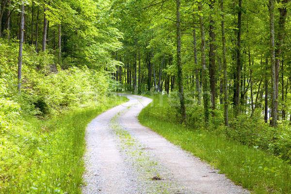 Forest road Stock photo © alexeys