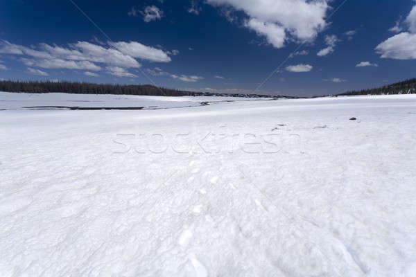 Snow Field Stock photo © alexeys