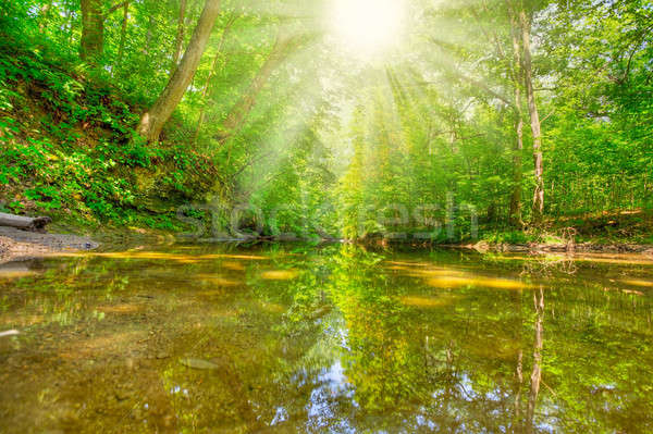 Morning in the forest Stock photo © alexeys