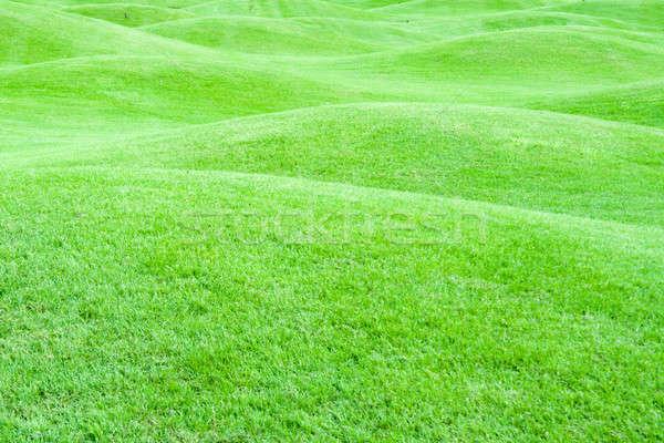 Green pastures 1 Stock photo © alexeys