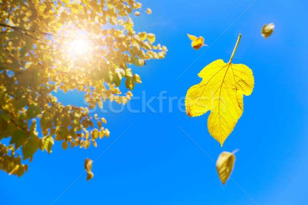 Fall Stock photo © alexeys