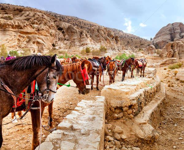 Horses of Petra Stock photo © alexeys