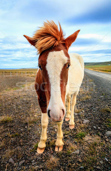 Poney distant route de gravier Islande nuages route Photo stock © alexeys