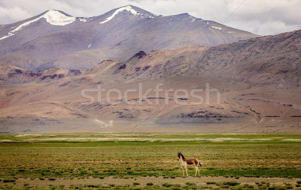 Selvatico ass plateau nubi erba natura Foto d'archivio © alexeys