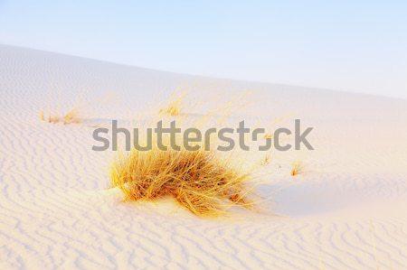 Stock photo: White Sands