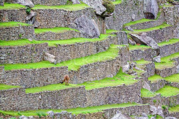 Мачу-Пикчу руин древних инка город Перу Сток-фото © alexeys
