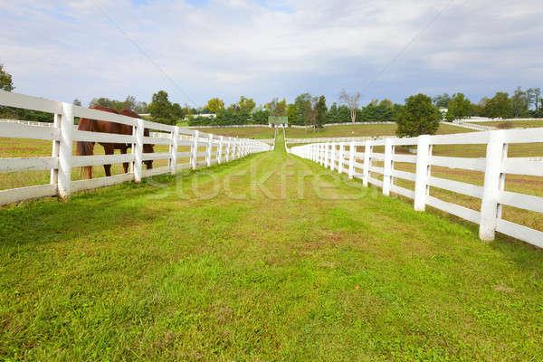 Horse farm  Stock photo © alexeys