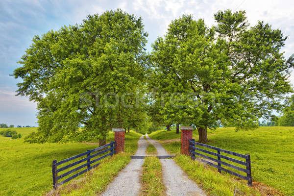 Country Road Stock photo © alexeys