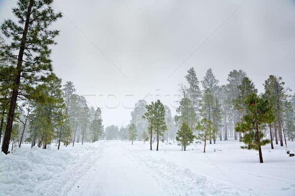 Scène sneeuwstorm bos weg winter storm Stockfoto © alexeys