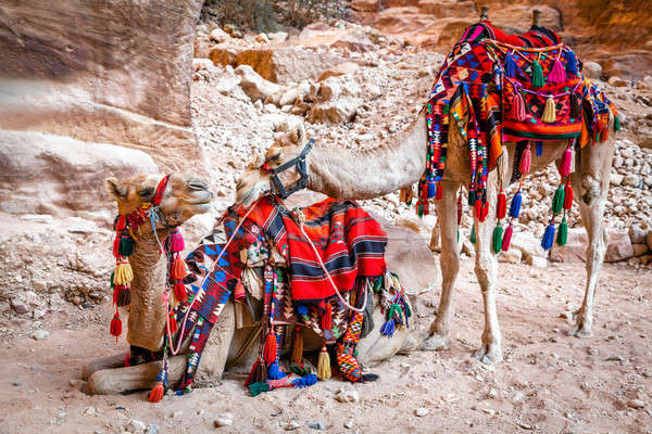 Camels in Petra Stock photo © alexeys