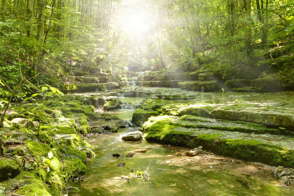 Stock photo: Stream in the forest
