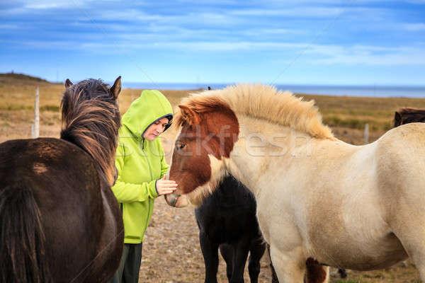 Woman with Icelandic Ponies Stock photo © alexeys