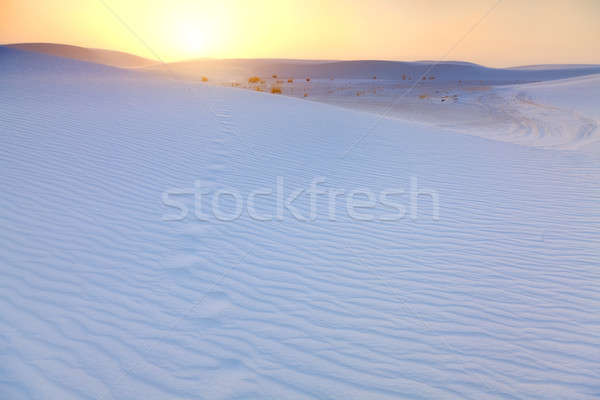 White Sands Footprints Stock photo © alexeys