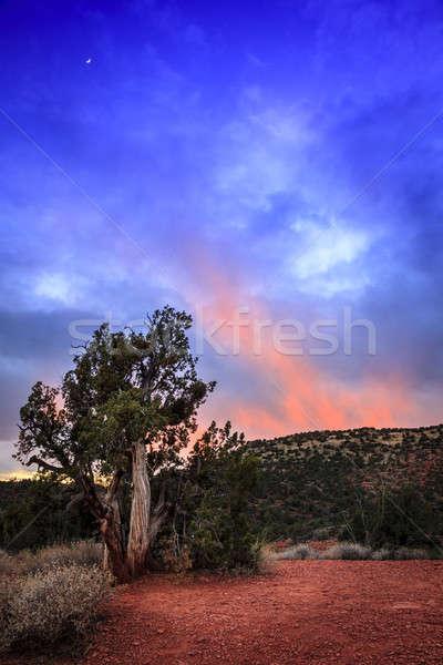 Stock fotó: Arizona · naplemente · magas · sivatag · naplemente · természet