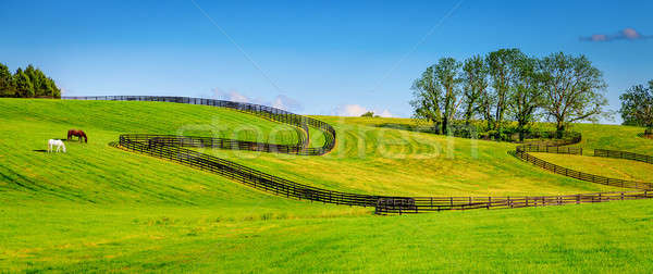 Horse farm fences Stock photo © alexeys