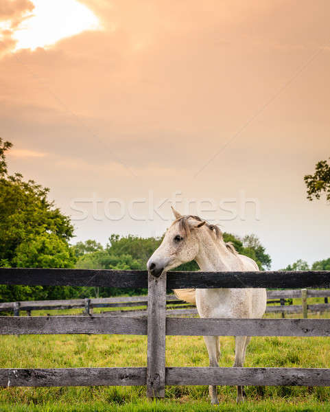 Horse of a farm Stock photo © alexeys