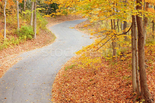 Winding alley in fall Stock photo © alexeys